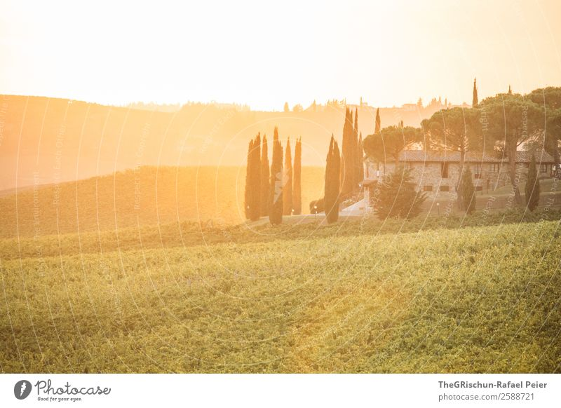 be present Landscape Yellow Gold Orange Sunset Moody House (Residential Structure) Vacation & Travel Property Vine Back-light Tuscany Hill Cute Italy Cypress