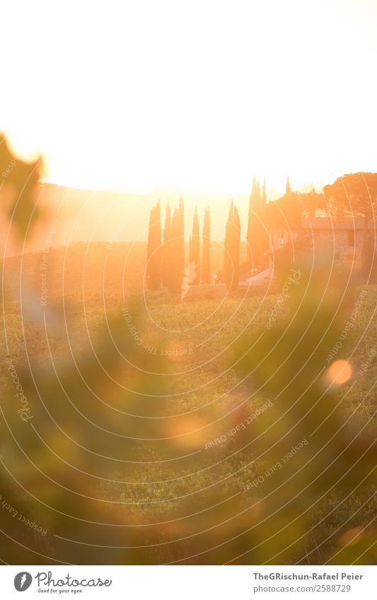 Tuscany sunset Nature Landscape Esthetic Wine Italy Travel photography Vacation & Travel Relaxation Sunset Back-light Bunch of grapes Vineyard Moody Romance