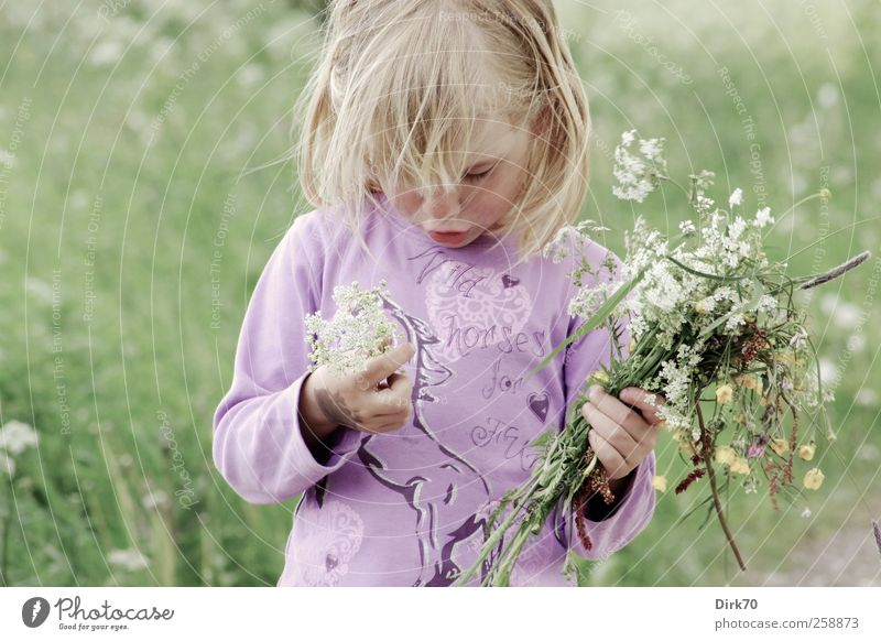 Spring! Playing Trip Freedom Human being Child Girl Infancy 1 3 - 8 years Flower Blossom Wild plant Bouquet Meadow Blossoming Fragrance Dream Growth Natural