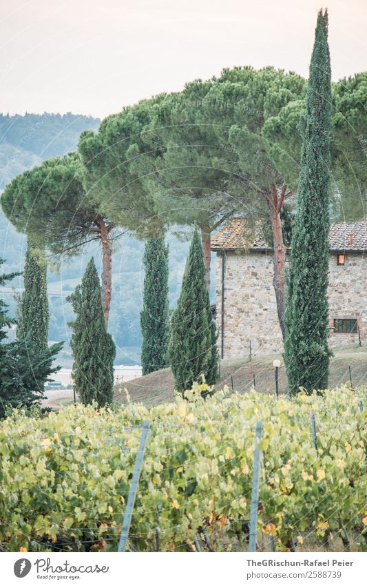 avenue Nature Green Cypress House (Residential Structure) Vacation & Travel Relaxation Vine Vineyard Avenue Tree Italy Tuscany Hill Colour photo Exterior shot