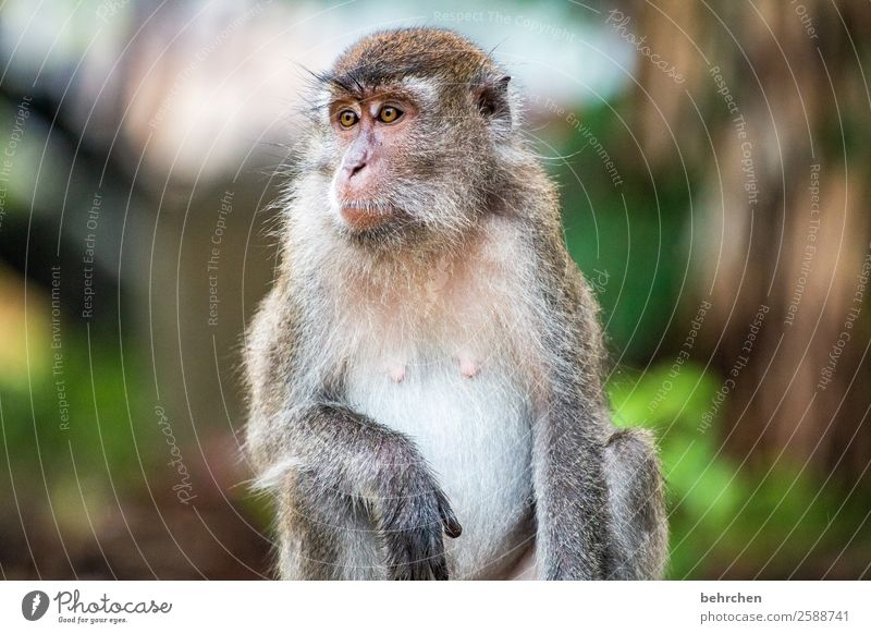 To live in freedom | FERNWEH Vacation & Travel Tourism Trip Adventure Far-off places Freedom Virgin forest Wild animal Animal face Pelt Monkeys longtail macaque