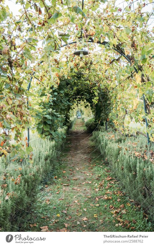 avenue Nature Green Garden Tunnel vision Arch Perspective Round Lanes & trails Calm Relaxation Break Colour photo Exterior shot Deserted Copy Space bottom