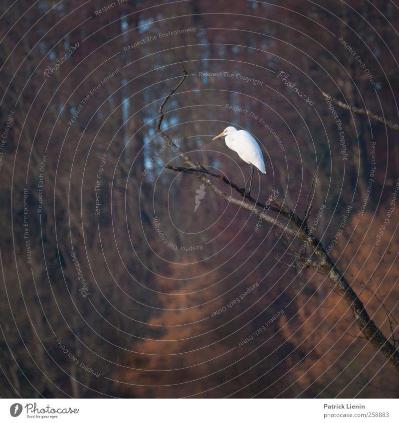 Nature White Plant Animal Forest Environment Dark Landscape Moody Bird Sit Wait Tall Wild animal Elements Communicate