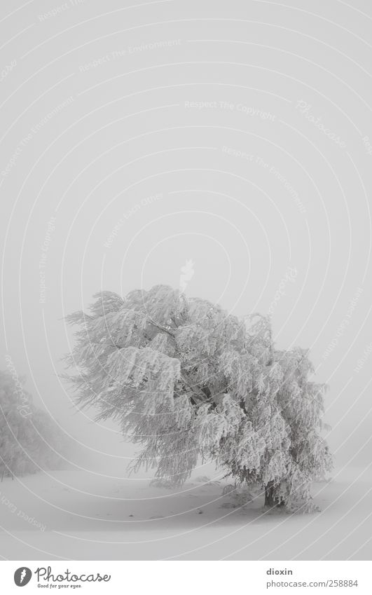 Sky Nature White Tree Plant Vacation & Travel Winter Cold Snow Environment Landscape Snowfall Weather Ice Wind Fog