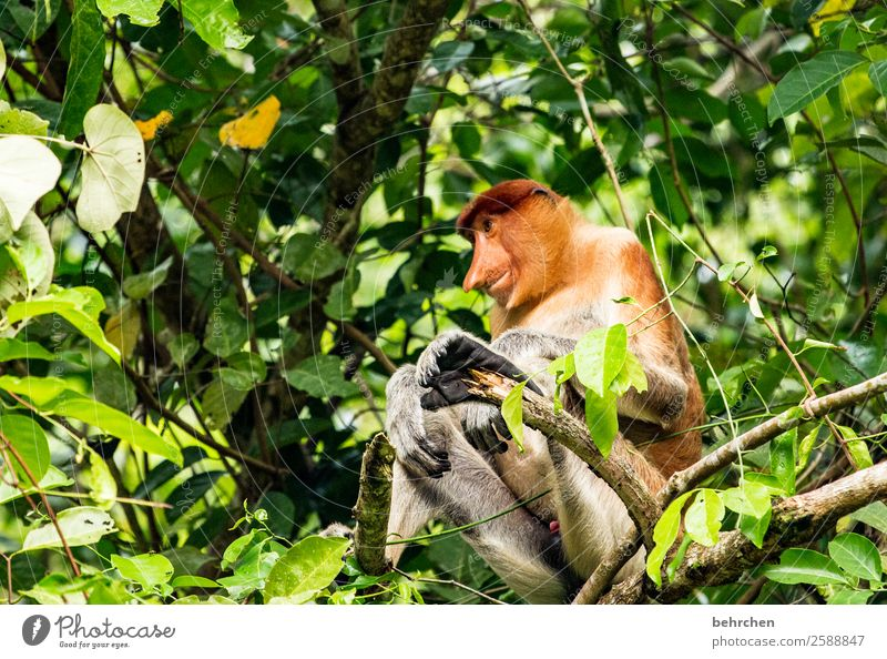 serenity Vacation & Travel Tourism Trip Adventure Far-off places Freedom Nature Landscape Tree Virgin forest Wild animal Animal face Pelt Monkeys
