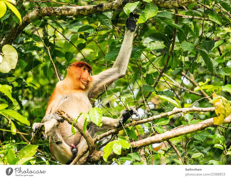 Nature Vacation & Travel Tree Relaxation Animal Far-off places Funny Tourism Exceptional Freedom Trip Wild animal Adventure Fantastic Observe Asia