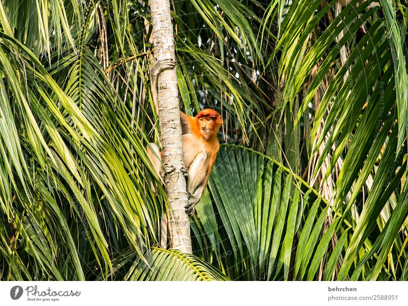 keep the overview Vacation & Travel Tourism Trip Adventure Far-off places Freedom Plant Tree Leaf Exotic Palm tree Tree trunk Virgin forest Wild animal