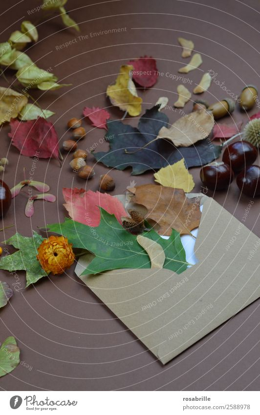 autumnal greetings with envelope, leaves and fruits Environment Nature Plant Autumn Leaf Blossom Seasons Decoration Collection Letter (Mail) Envelope (Mail)
