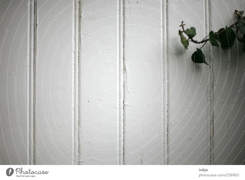 Ivy vs. empty facade Plant Garden Deserted Wall (barrier) Wall (building) Facade Wood Line Old To dry up Growth Simple Gloomy Wild Green White Emotions Moody