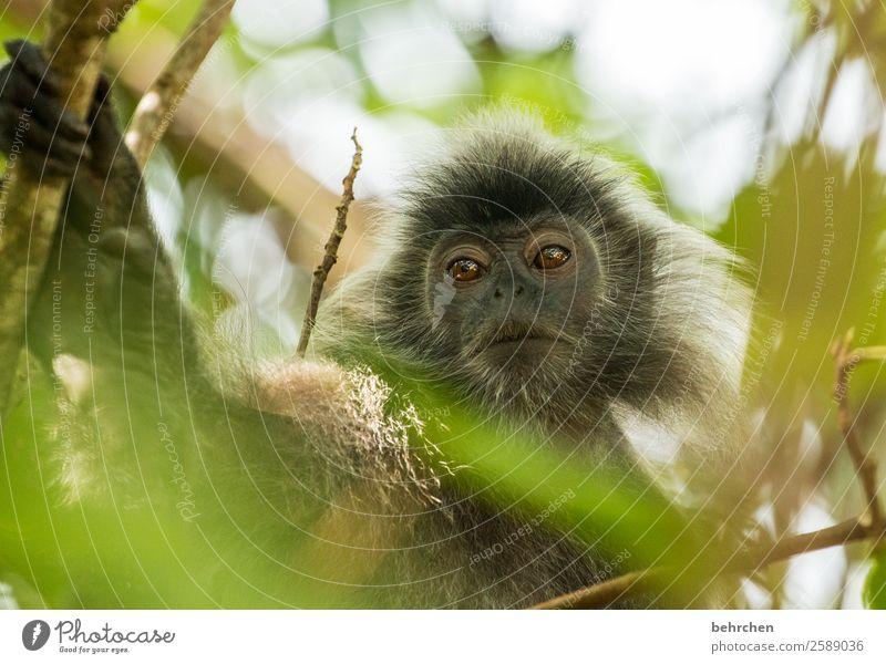 pffff, monday, i look down on you! Cute inquisitorial Leaf Impressive Tree Sunlight Trip Tourism Vacation & Travel Animal protection Asia Adventure Monkeys