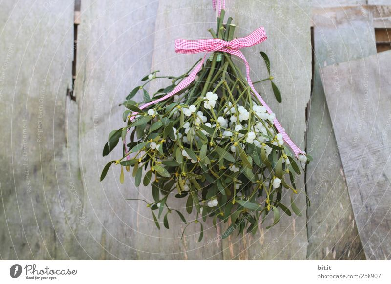 mistletoe branch Living or residing Flat (apartment) Plant bleed Foliage plant Bow hang Fresh Round green Romance Tradition Mistletoe Twigs and branches