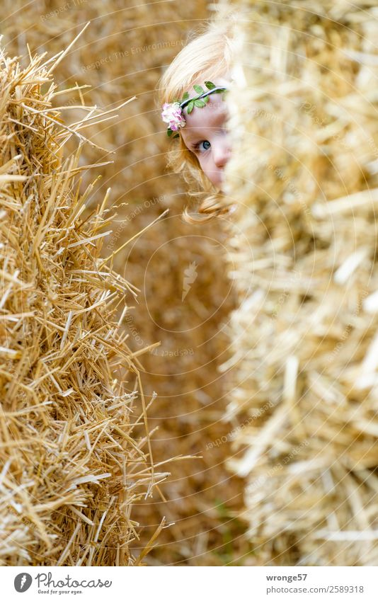 game of hide-and-seek Human being Child Toddler Girl 1 3 - 8 years Infancy Playing Yellow Gold Joy Hide Search Autumn Bale of straw Looking into the camera