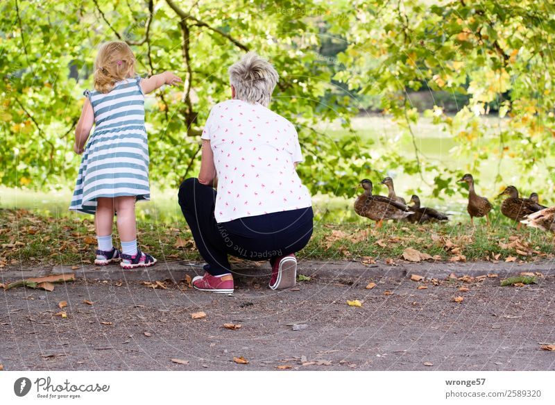 Grandma and granddaughter feed ducks at the pond Human being Child Girl Woman Adults Female senior Grandmother 2 3 - 8 years Infancy 45 - 60 years Summer Tree