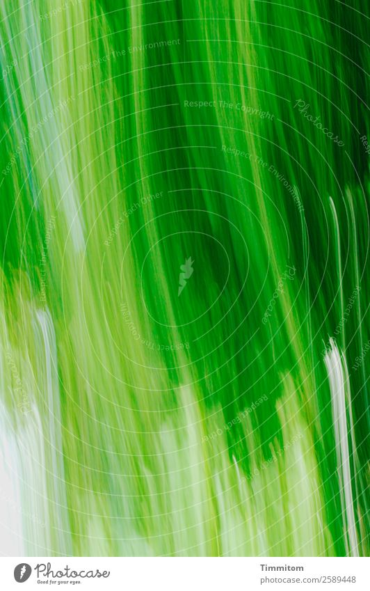 Green, moving (vertical) Environment Nature Plant Tree Garden Movement Natural Emotions Joy Colour photo Exterior shot Deserted Motion blur