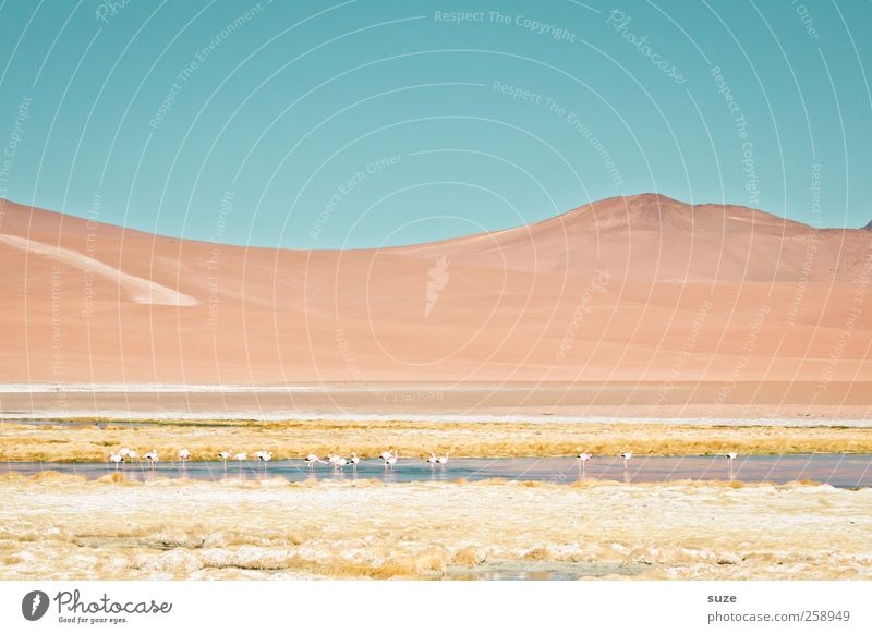 Chile Mountain Environment Nature Landscape Elements Earth Sky Summer Climate Beautiful weather Lake Flamingo Bright South America Pastel tone Salar de Atacama