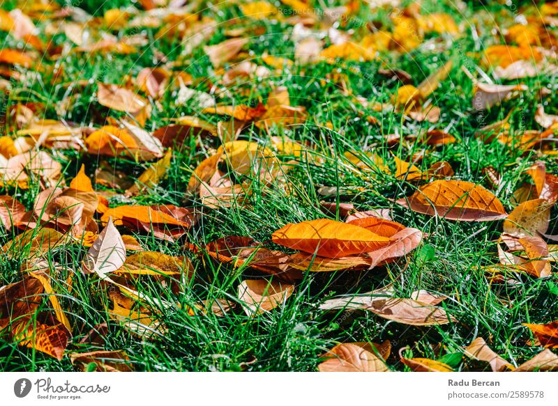 Orange And Red Autumn Leaves In Fall Season Nature Plant Colour Beautiful Green Landscape Tree Leaf Forest Yellow Natural Grass Garden Brown