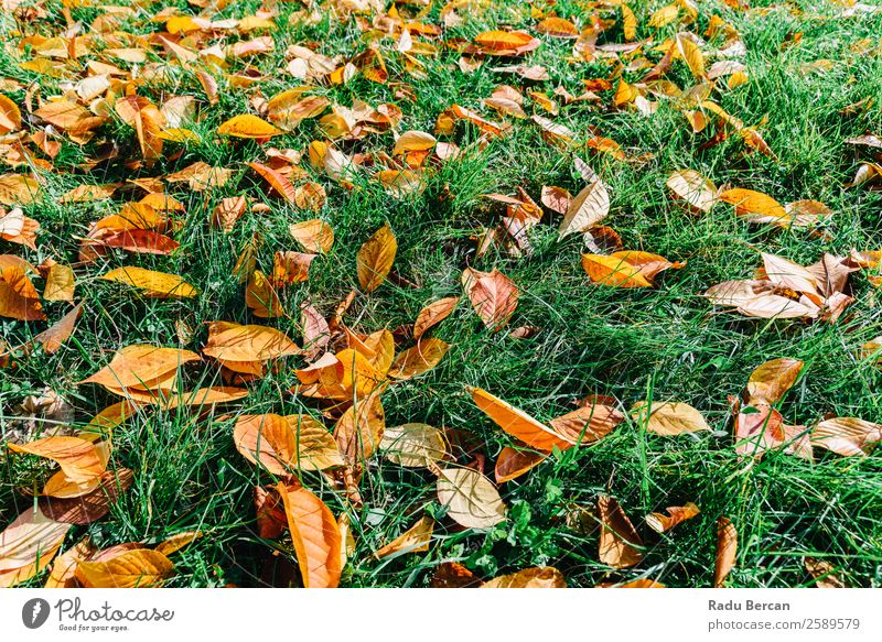 Orange And Red Autumn Leaves In Fall Season Nature Plant Colour Beautiful Green Landscape Tree Leaf Forest Yellow Environment Natural Grass Garden