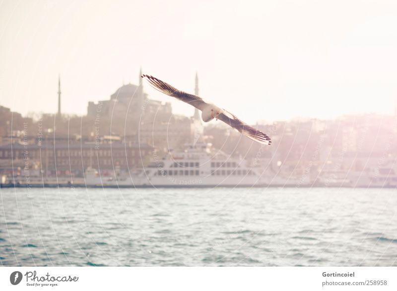 Flying. Town Port City Skyline Tourist Attraction Bird Warmth Seagull The Bosphorus Hagia Sophia Ferry Ocean Istanbul Colour photo Exterior shot Copy Space top
