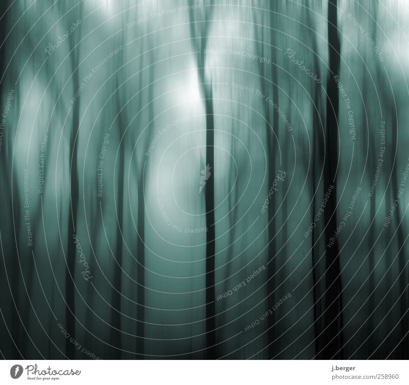 blue in the wood Environment Nature Landscape Plant Autumn Winter Fog Tree Forest Virgin forest Esthetic Exceptional Dark Creepy Blue Black White Fear