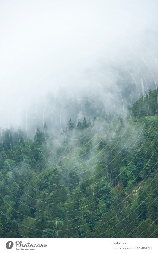 cloud forest Environment Nature Landscape Plant Sky Summer Autumn Fog Tree Leaf Forest Hill Alps Mountain Dark Natural Brown Gray Black Calm Clouds Dreary