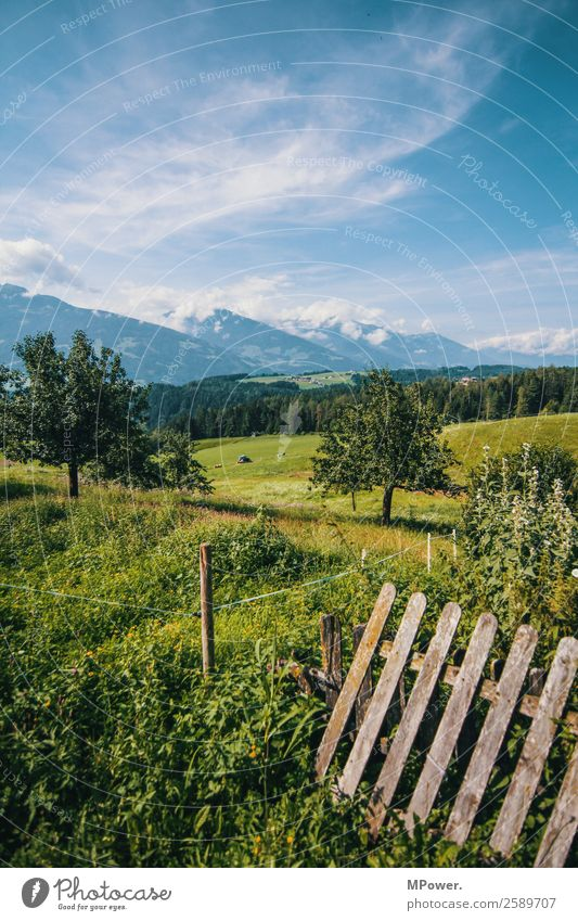 mountains meadows forests Environment Landscape Beautiful weather Alps Mountain Peak Snowcapped peak Fence Fruittree meadow Alpine pasture Tree Field Austria
