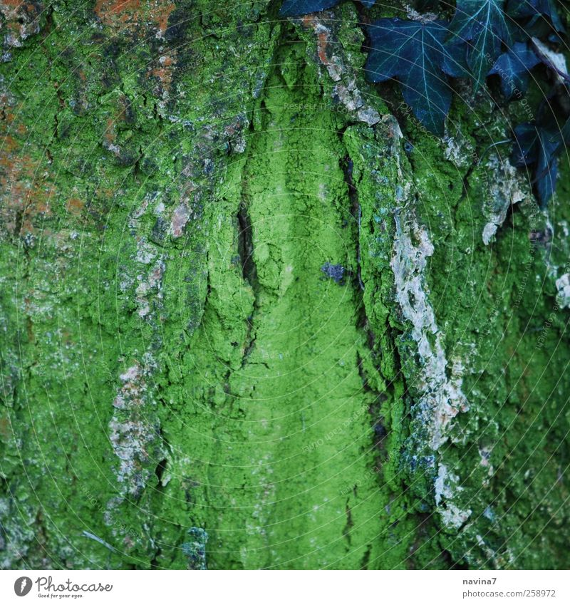 I think it's a beautiful tree bark. Nature Plant Tree Moss Ivy Wood Green Colour photo Exterior shot Copy Space middle Day