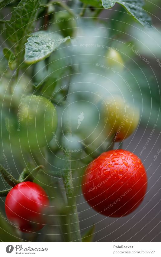 #A# Tomato harvest Environment Nature Esthetic Tomato salad Tomato plantation Tomato juice Tomato soup Harvest Mature Red Colour photo Multicoloured
