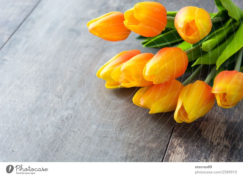 Tulips on wooden background. Vacation & Travel Feasts & Celebrations Easter Flower Wood Orange Colour Tradition Public Holiday Guest Festive Copy Space