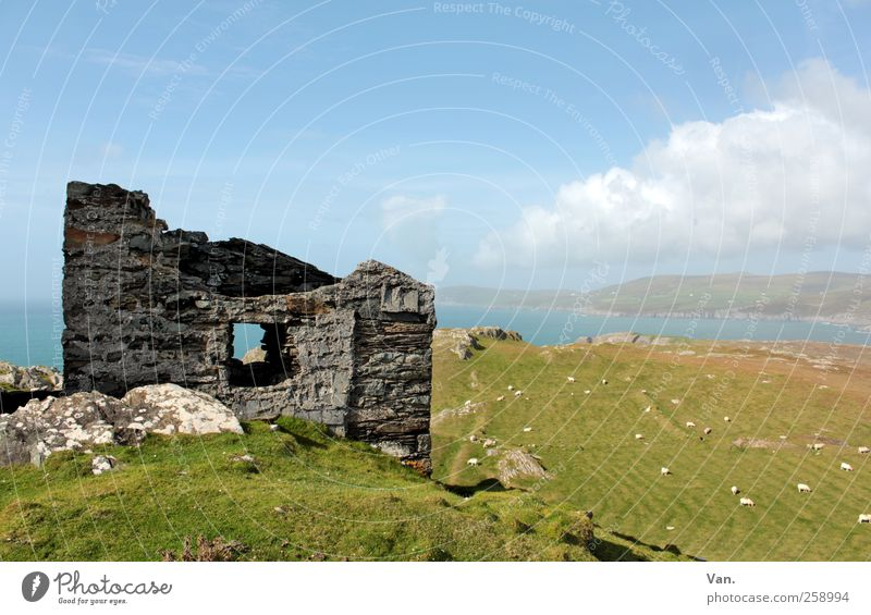 monument Nature Landscape Plant Animal Earth Air Water Sky Clouds Beautiful weather Grass Meadow Field Hill Coast Bay Ocean Ireland Ruin Farm animal Sheep