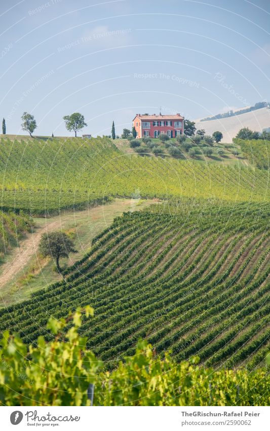 house Landscape Blue Green Pink House (Residential Structure) Line Vine Tree Vineyard Bunch of grapes Italy Sky Hill Colour photo Exterior shot Deserted