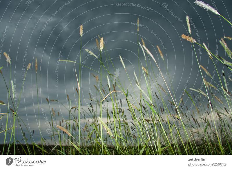 Nature Plant Summer Clouds Environment Landscape Autumn Grass Horizon Weather Wind Field Climate Tourism Trip Storm