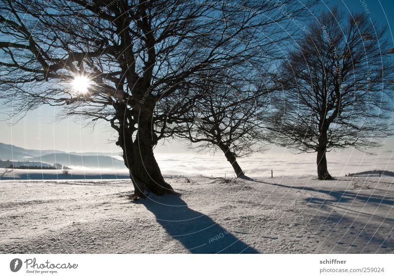 And there's sun! Environment Nature Landscape Plant Sunlight Winter Climate Beautiful weather Ice Frost Snow Tree Peak Snowcapped peak Fantastic Cold White