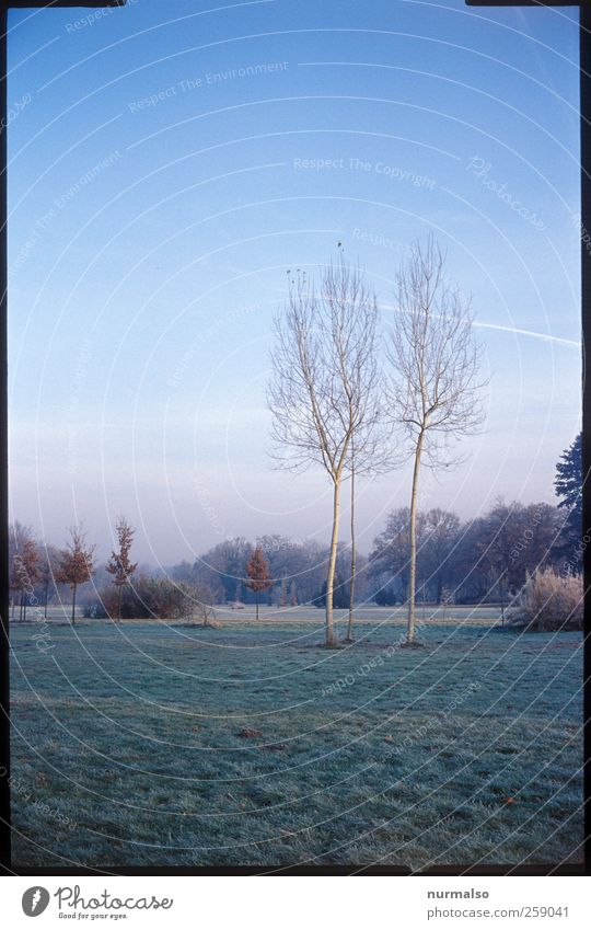 3 birches in the park Leisure and hobbies Garden Art Nature Landscape Plant Animal Tree Grass Park Meadow Potsdam Discover Relaxation Freeze Looking Esthetic