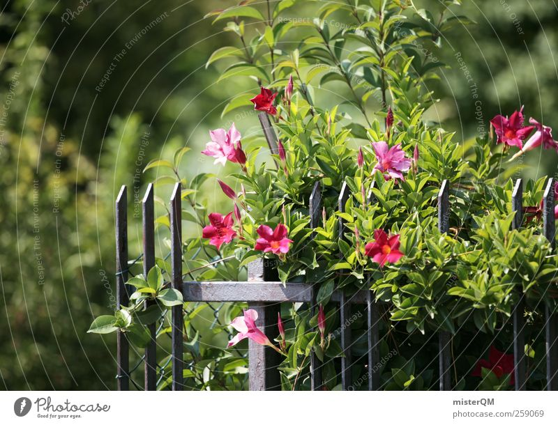 Garden. Art Esthetic Horticulture Garden fence Garden festival Green Foliage plant Blossom Blossoming Summer Nature Colour photo Subdued colour Exterior shot