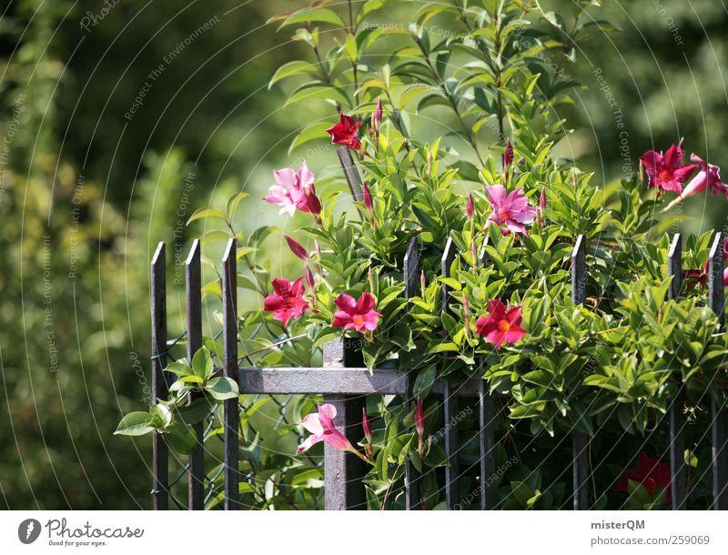 Nature Green Summer Garden Blossom Art Esthetic Blossoming Horticulture Foliage plant Garden fence Garden festival