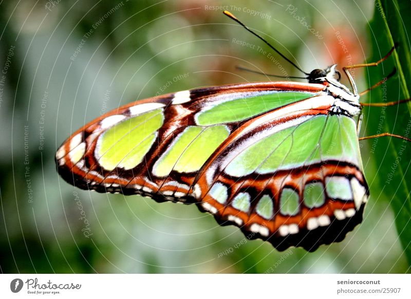 Green Plant Legs Wing Butterfly Feeler Flashy