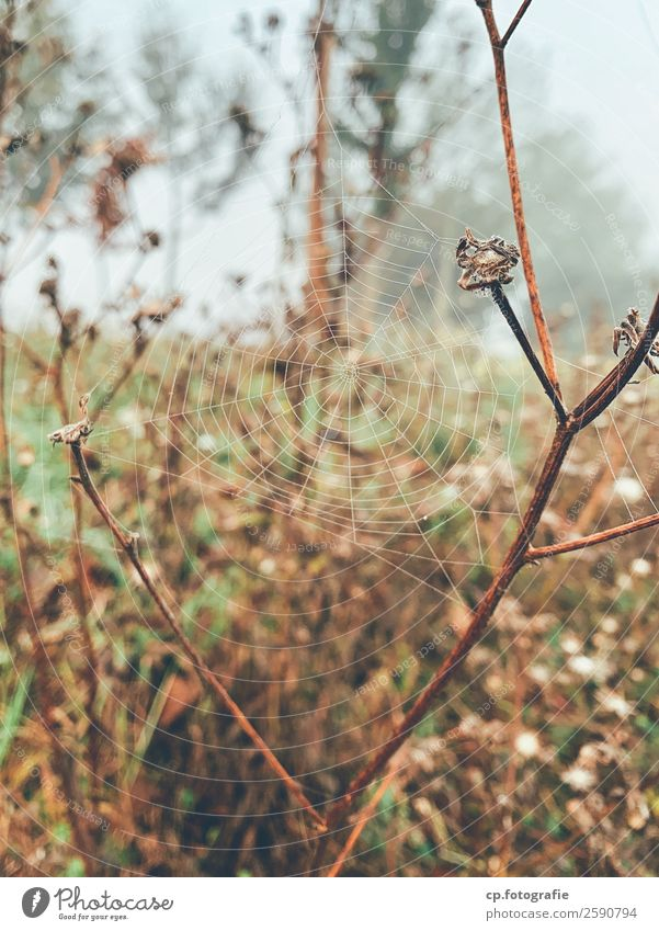 dreamcatcher Nature Plant Drops of water Autumn Bad weather Fog Grass Wild plant Garden Meadow Natural Brown Green Spider's web composite Limp Colour photo