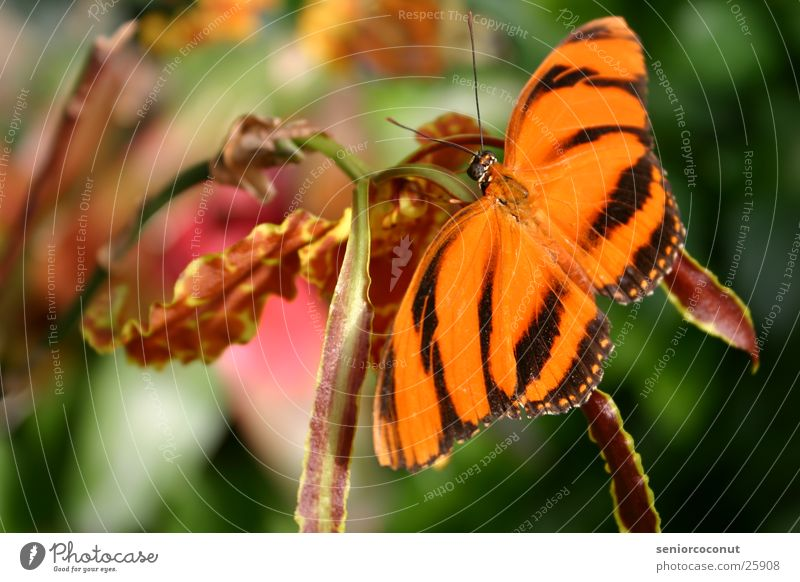 Really Butterfly Orchid Flower Feeler Insect Wing Colour Orange