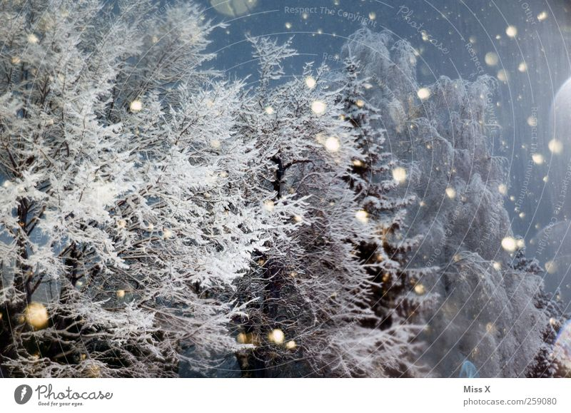Tree Winter Forest Cold Snow Snowfall Ice Frost Branch Point Night sky Bad weather Snowflake Winter forest Winter mood