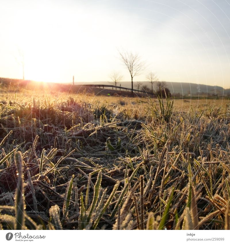 early frost Environment Landscape Sky Sun Sunrise Sunset Sunlight Winter Ice Frost Tree Grass Meadow Field Outskirts Deserted Street Lanes & trails Country road