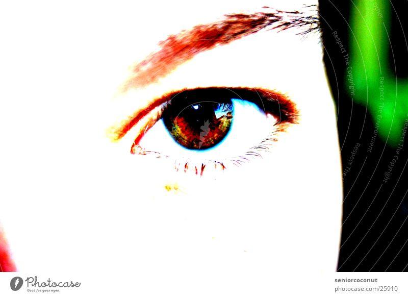 Look at me Eyebrow Brown Eyelash Woman Eyes Iris