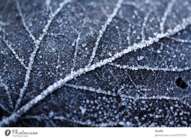 Rime on a fallen leaf in December Hoar frost Frost ice crystals Frozen Ice winter cold Rachis Freeze Cold Near naturally Winter mood Winter's day chill January