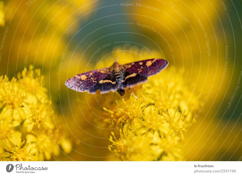 butterfly Summer Plant Blossom Butterfly Touch Flying Near Yellow Beautiful Garden Park Insect Nature Environment Natural Sit Wing Multicoloured Meadow