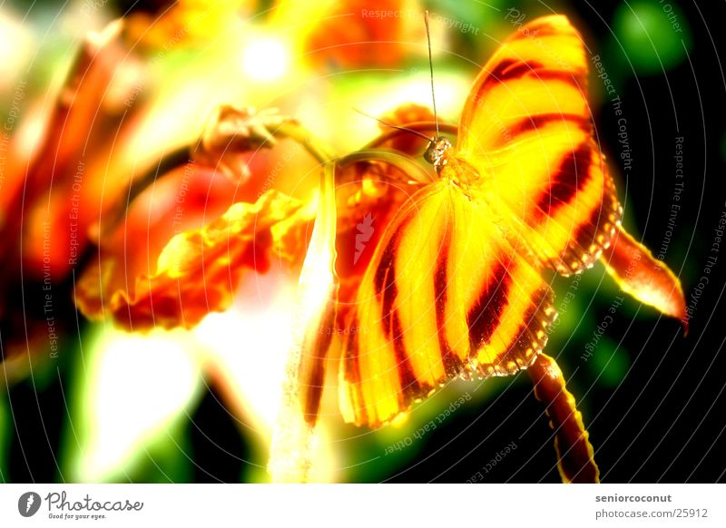 unreal Butterfly Orchid Flower Feeler Insect Wing Colour Orange