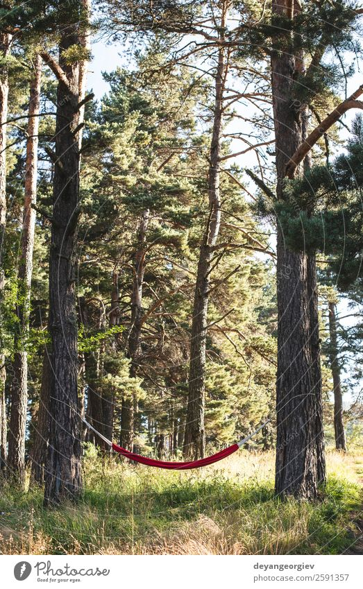 Hammock in the forest Lifestyle Beautiful Relaxation Leisure and hobbies Vacation & Travel Camping Summer Sun Nature Landscape Tree Park Forest Green Red Colour