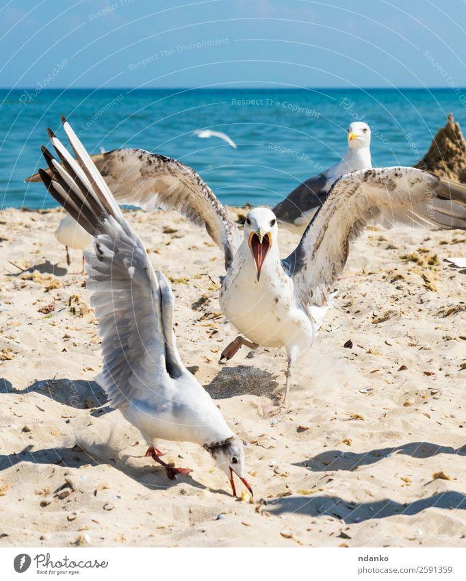 flock of white gulls Sky Nature Vacation & Travel Summer Blue White Landscape Ocean Animal Beach Black Environment Natural Coast Freedom Bird