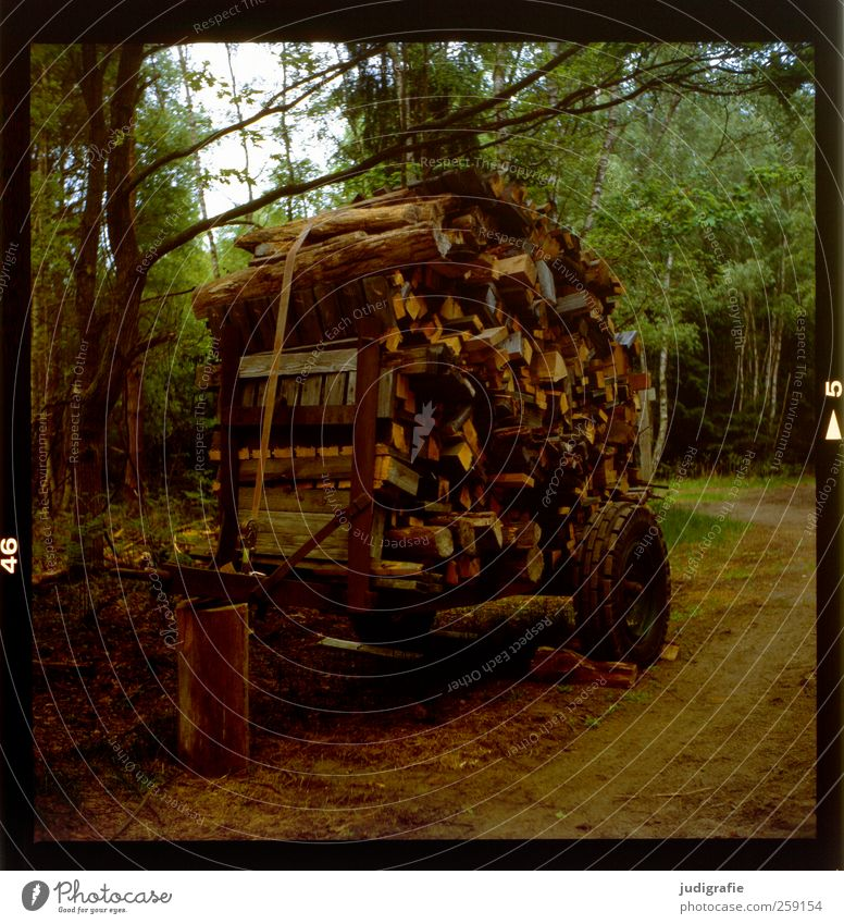 wood Environment Nature Landscape Plant Tree Forest Wood Firewood Carriage Collection Supply Stack Colour photo Exterior shot Deserted