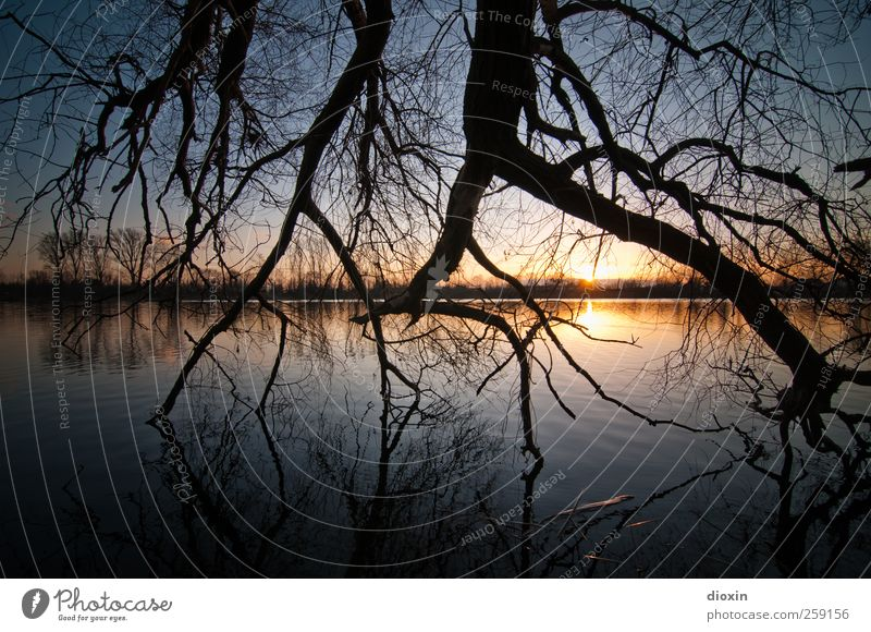Till The End Of The Day Environment Nature Landscape Water Sky Cloudless sky Sun Sunrise Sunset Sunlight Plant Tree Branch Twigs and branches Lakeside