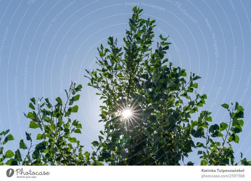 Gegenlichtaufnahme mit Baum Environment Nature Landscape Sky Stars Sun Sunlight Summer Beautiful weather Tree Leaf Park Blue Gold Green sunstar sunstars Camera