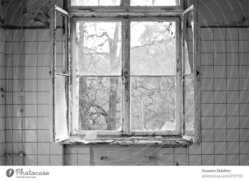 Beelitz. Dream house Window Old Broken Shard Ventilate Vandalism Sanitarium Kitchen Tile Black & white photo Open Window pane Interior shot Deserted Twilight